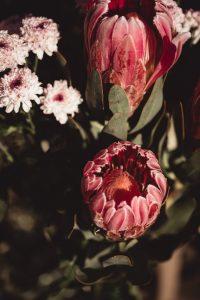 flores-temporada